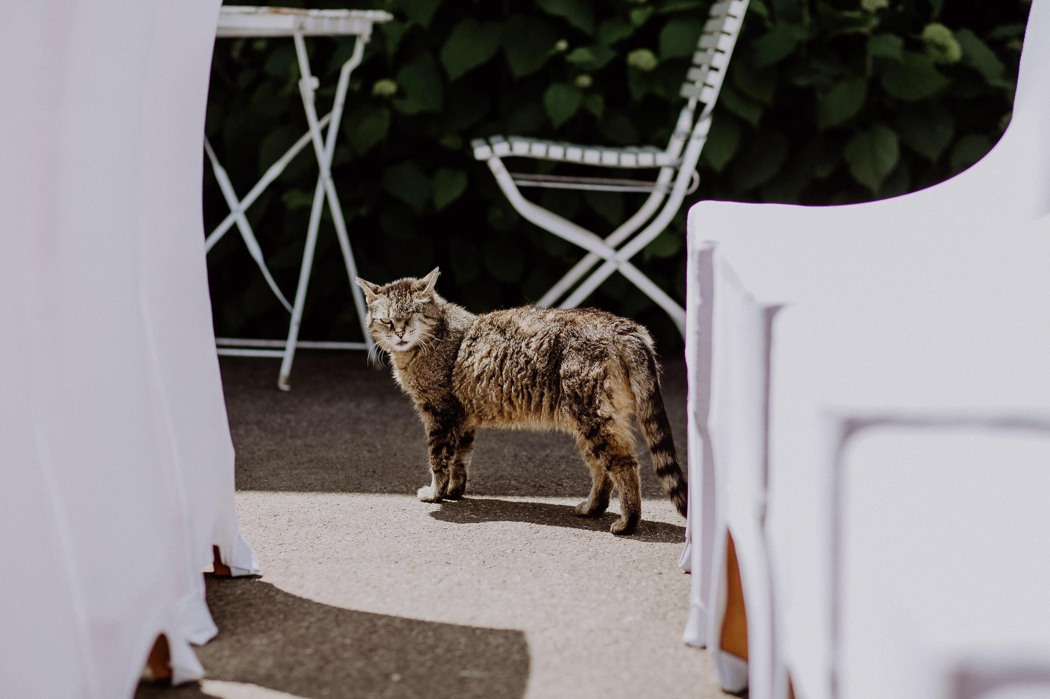 wedding photographer hamilton new zealand 1013 3