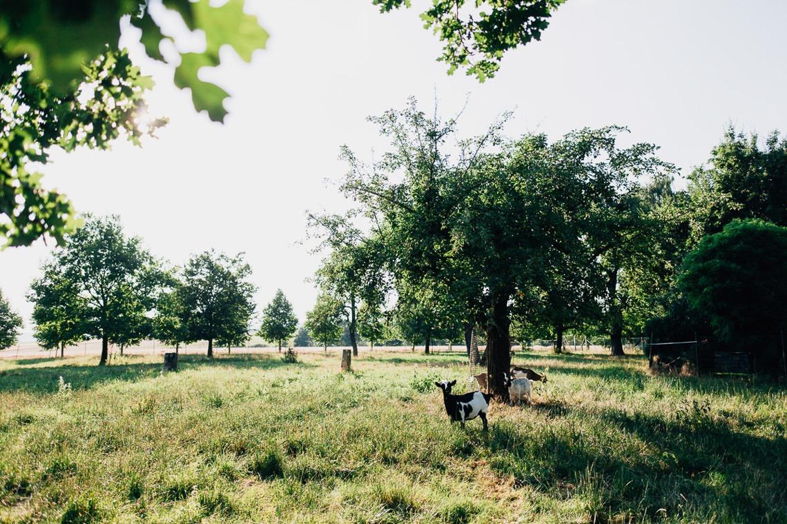 wedding photographer hamilton new zealand 1073 2